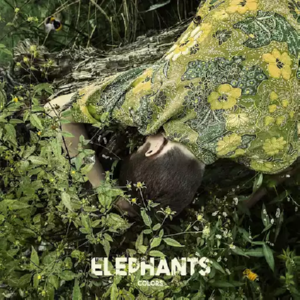 The Elephants - Colors (2017)